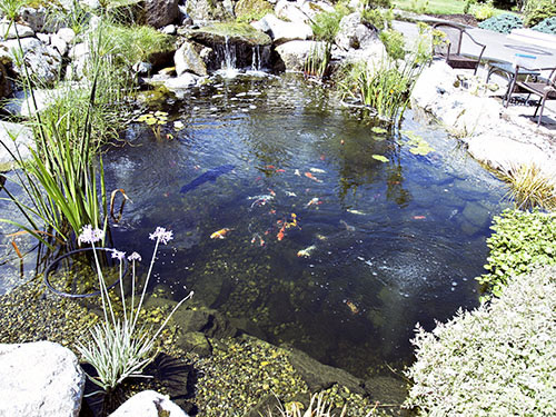 Zen japanese water garden designs water garden koi for Japanese koi pond garden