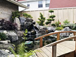 Japanese Water Garden, koi Pond and waterfall